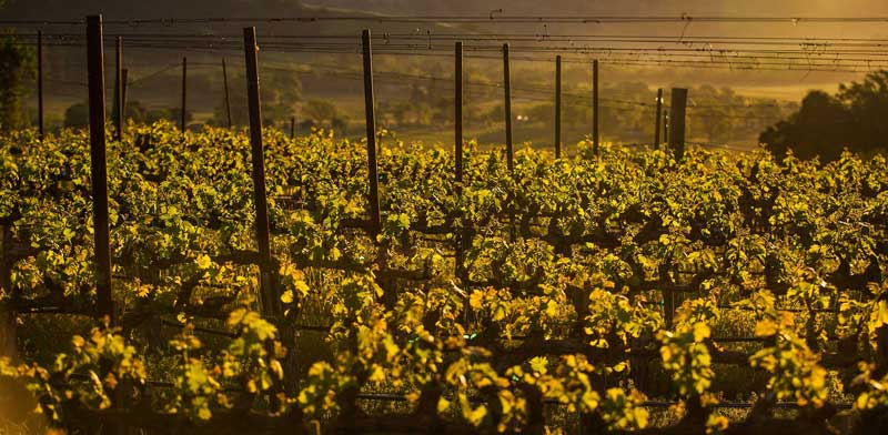 The sun dawning above Keever Vineyard